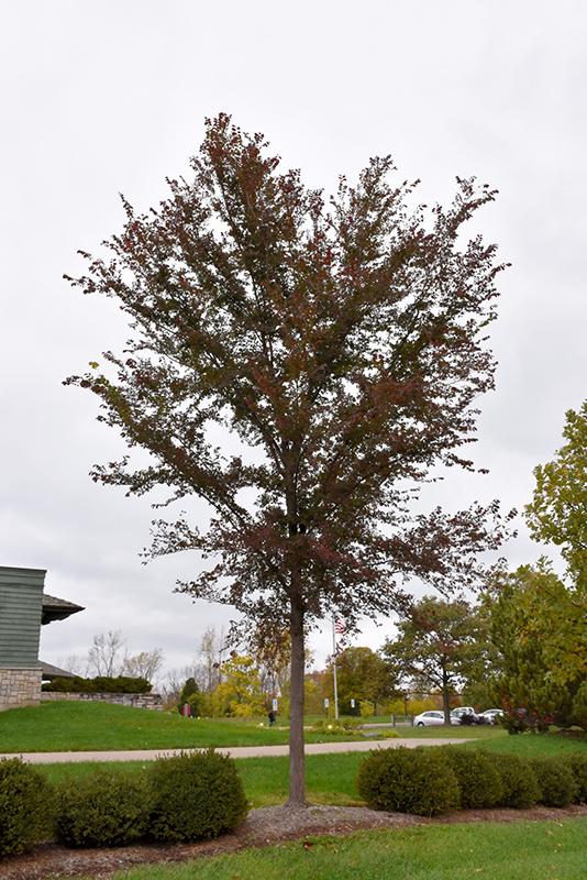 Elm Landscaping